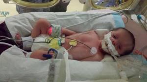 New baby Callie